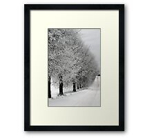 Trees line  in winter pathway from old farm Framed Print