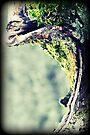 I shall wait beneath the moss by Joshua Greiner