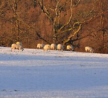 Lakeland Winter Scene by Jacqueline Wilkinson
