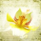 Orchid Symphony by Olga