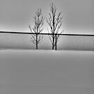 """fenced IN"" by grsphoto"