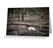 Excellent camouflage Greeting Card