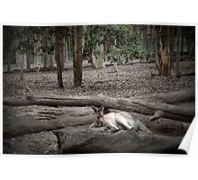 Excellent camouflage Poster