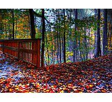 Autumn Ravine  Photographic Print