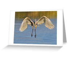 GB Heron in Flight 1 Greeting Card