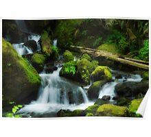 Merriam Falls, Lake Quinault, Wa. Poster