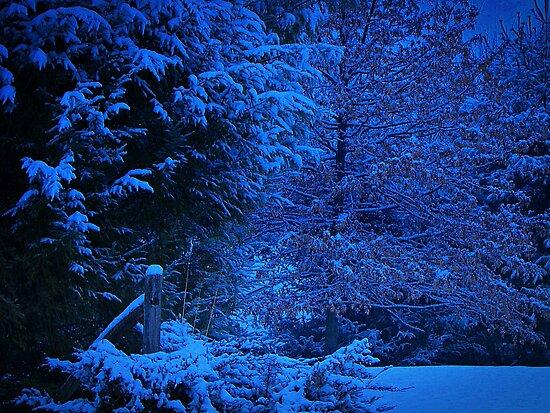 Evening Blanket  by David Dehner