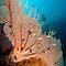 ENDANGERED SPECIES - Coral