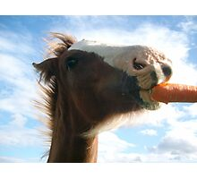 Carrot Kisses Photographic Print
