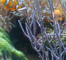 Clownfish by somthingjonas