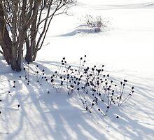 Lovely Winter Pattern, 2011 by Claudia Smaletz