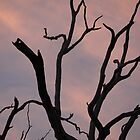 Sun setting on a dead tree by Cassandra Purkiss