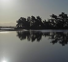 Shining silhouette by Duncan Cunningham