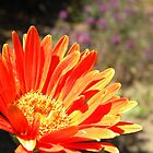 Orange Flower Blossoming by Ryan Fritch