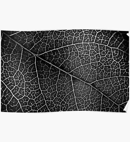 Leaf Projection Poster