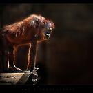 97 %  human by ArtX