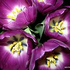Purple Tulips by Susan E. King