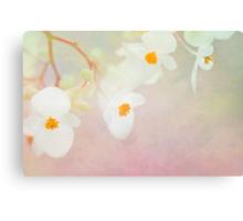 White Begonias Canvas Print