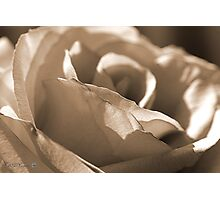 Sepia Long-stemmed Yellow Rose Photographic Print