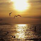 Golden Morning Birds at San Pedro by Lorin Richter