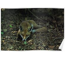 Let Sleeping Foxes Lie Poster