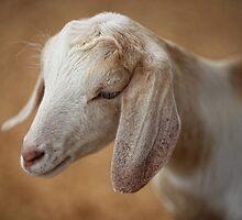Goat by Sebastian J. de Koning