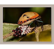 eggs hatched Photographic Print
