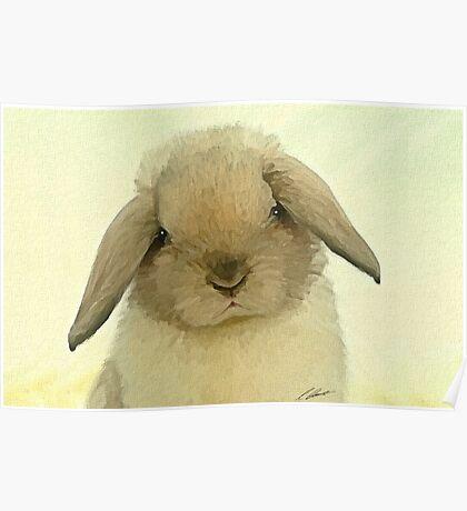 Mini Lop bunny Poster