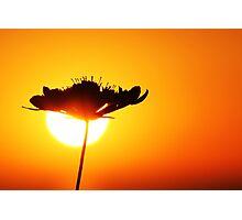 Wild Sun Photographic Print