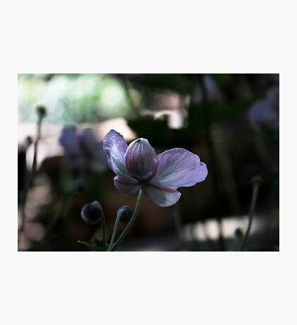 Monastery Garden Photographic Print
