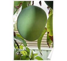 Green Mango Delight Poster