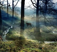 The Principles of the Perilous Forest. by Kenart