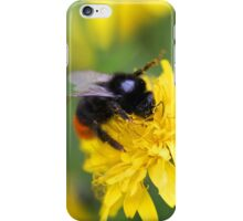 The red tailed bumble iPhone Case/Skin