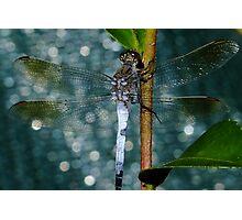 Dragon Blue! Photographic Print