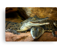 ~Little Crocs~ Canvas Print