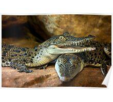 ~Little Crocs~ Poster
