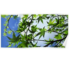 Backlit leaves Poster