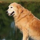 Golden Pond by SetterSmiles