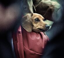 Carry-on Dog. by Farfarm