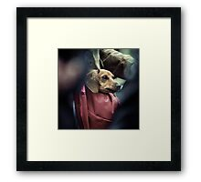 Carry-on Dog. Framed Print