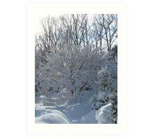 Ornamental Tree Bathed In Fresh Snow Art Print