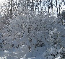 Ornamental Tree Bathed In Fresh Snow by fionahoratio