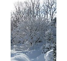 Ornamental Tree Bathed In Fresh Snow Photographic Print