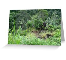 Tully Gorge Greeting Card