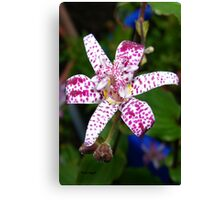 Spotted Lily Canvas Print