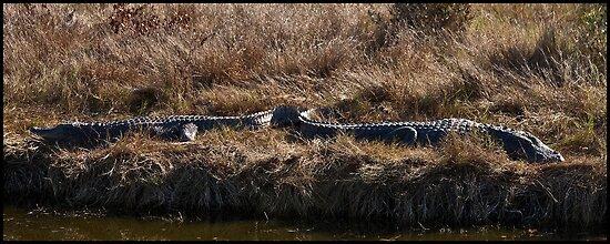 Gator Bookends by mimsjodi