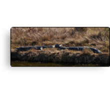 Gator Bookends Canvas Print