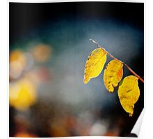 tree yellow leaves Poster