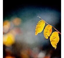 tree yellow leaves Photographic Print
