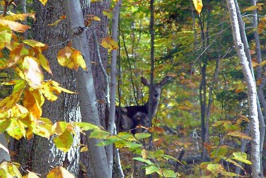 Deer Hidden in Fall Colors by wrathko
